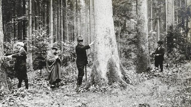 Eine schwarz-weiss Aufnahme von Männern, welche Bäume vermessen.