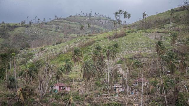 Umgerissene Bäume, zerstörte Häuser auf einem Hügelzug.