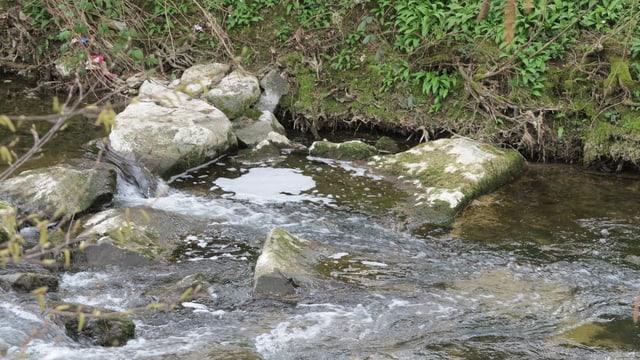 Bach mit Steinen und Schaum im Wasser