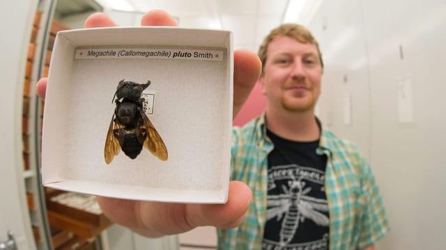 Ein Mann hält eine präparierte Riesenbiene in einer Schachtel in die Kamera.