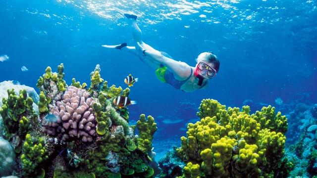 Eine tauchende Frau schaut sich Korallen an.