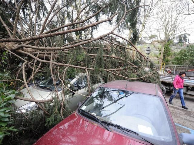 Autos unter einem umgestürzten Baum.