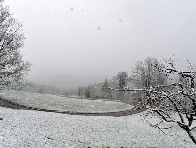 Schnee auf Wiese und Bäumen.