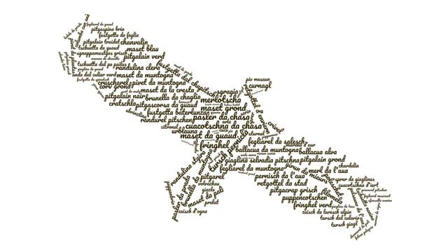 In maletg d'in utschels ord ils nums da tut ils utschels existents en l'Engiadina.