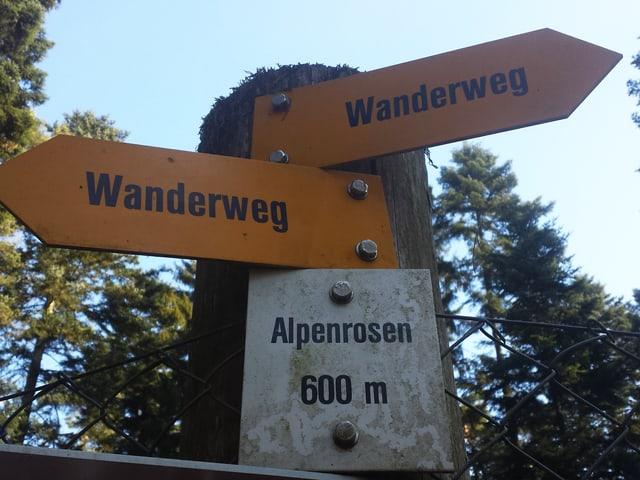 Wegweiser Alpenrosen.