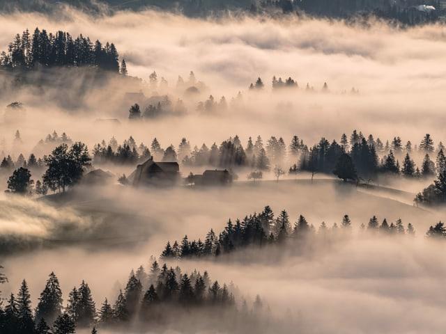 Nebel über einem Wald