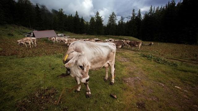 Alp bei Prato in der Leventina