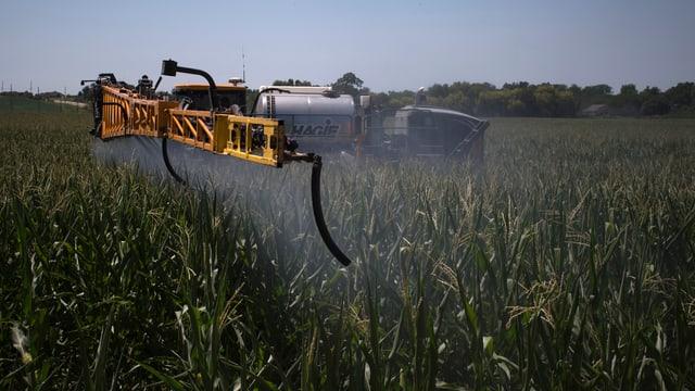 Ein Bauer versprüht Pestizid auf einem Maisfeld.