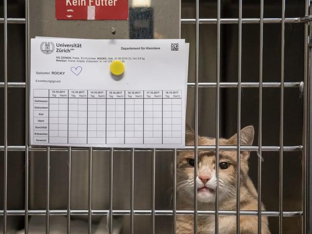 Kater Rocky schaut aus einem Käfig, an die Gitterstäbe ist sein Krankenblatt geheftet.