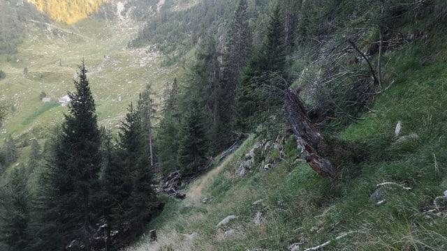 vallada en muntogna, davant intginas plantas