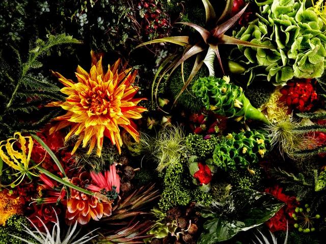 Eine farbenprächtige Blumenlandschaft von Makoto Azuma.