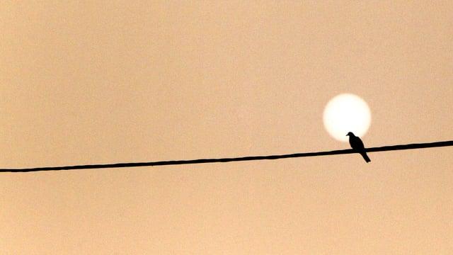 Ein Vogel sitzt auf einer Stromleitung. Sein Kopf kommt genau vor der Sonnenscheibe zu liegen.
