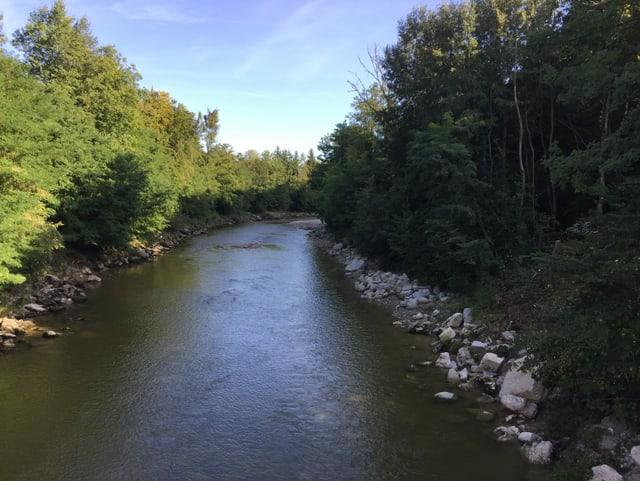 Fluss fleisst durch Wald.