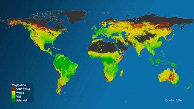 Ein Satellitenbild der Erde. Die Farben stehen für die Chlorophyllmenge der Pflanzen und somit für die Entwicklung der Vegetation.