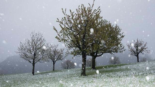 Grosse Schneeflocken fallen auf eine wiese bei Pratteln/BL.