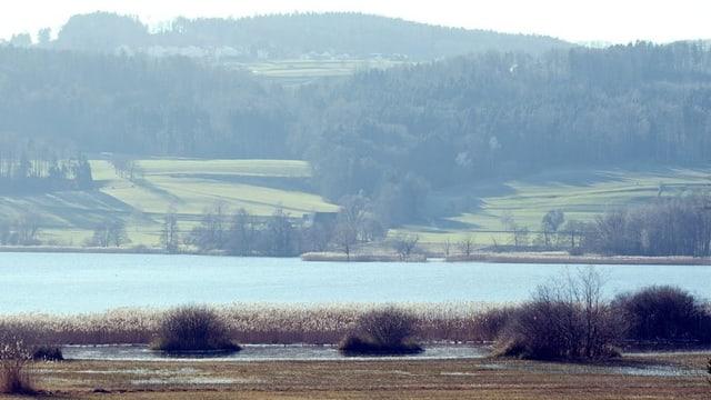 In der Ferne liegt der Greifensee vor malerischer Kulisse.