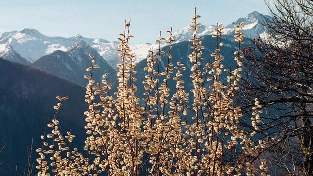 La Val Calanca