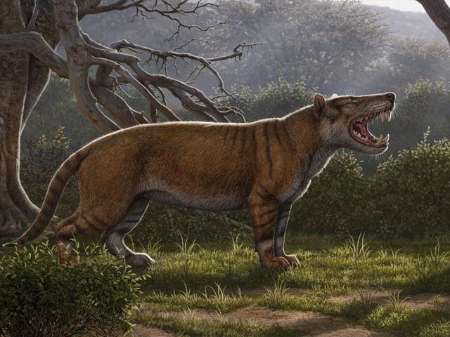 Illustration des löwenähnlichen Tiers.