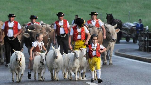 Alpfahrt mit Sennen, Kindern, Geissen und Kühen unterwegs im Morgengrauen zur unteren Schwägalp.