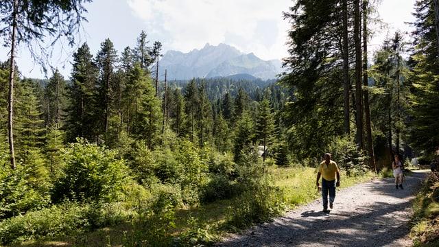 Ein Mann läuft auf einem Waldweg, im Hintergrund ist der Pilatus zu sehen.