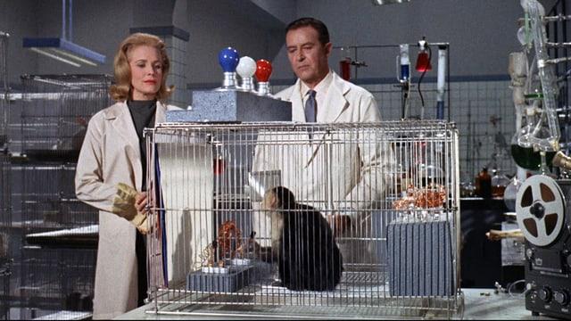 Ein Mann und eine Frau in einem Labor betrachten einen Affen im Käfig.