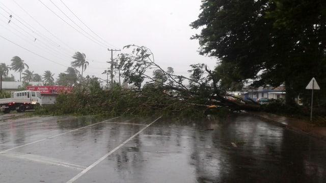 Purtret da plantas cupitgadas sin ina via sin las inslas Fidschi. Là suffla in ciclon gigant.