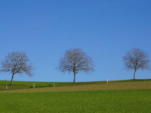 Bäume am Horizont in der Herbstsonne