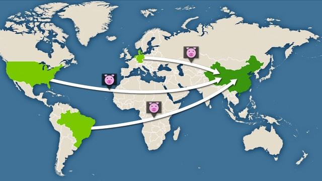 Weltkarte, worauf die USA, Brasilien, Dänemark, Deutschland und die Niederlande markiert sind. Von ihnen aus gehen Pfeile in Richtung China. Die Pfeile sind mit Schweine-Icons ergänzt.