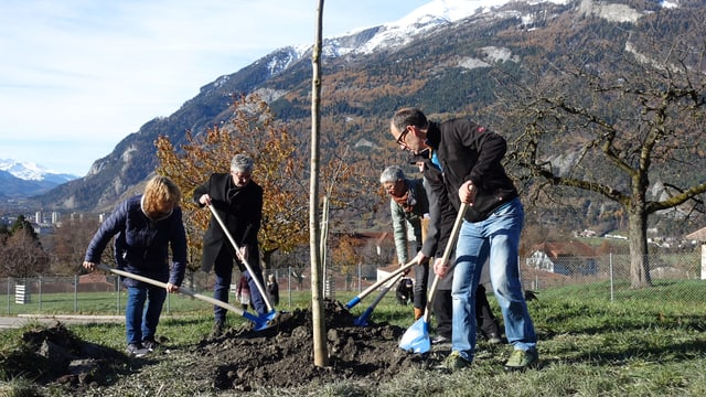 Gruppe schaufelt Erde auf die Wurzeln eines Baums.