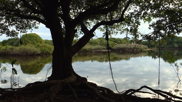 Am Ufer des Rio Negro