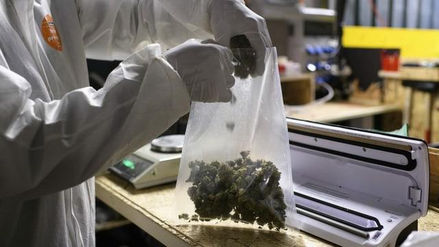 Doctoressas e medis duain pudair prescriver cannabis direct cun in recept a las pazientas ed ils pazients.