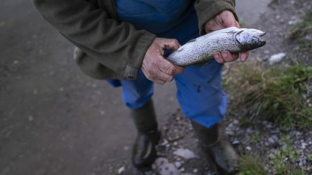Ein Fischer zeigt seine Forelle.