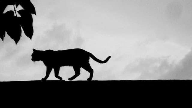 Silhouette einer Katze auf einer Mauer.