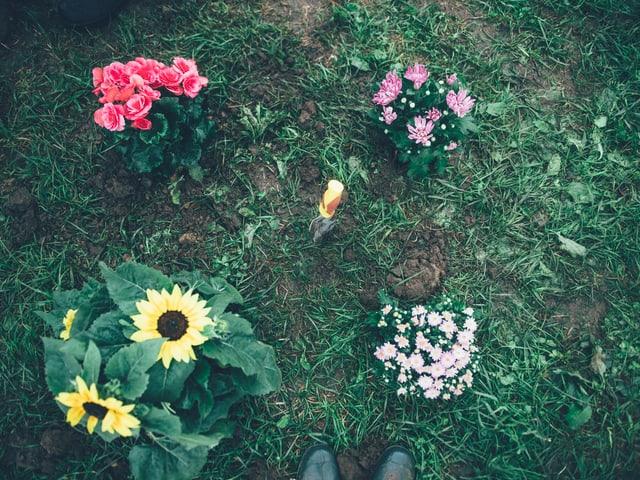 Blumen am Heitere