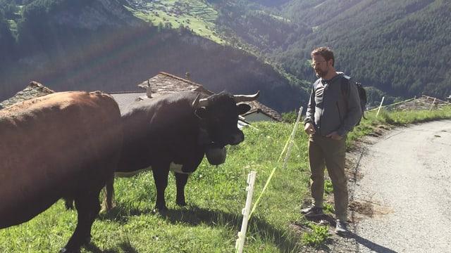 Nik trifft beim Wandern auf Ehringerkühe.