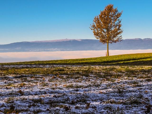 Vorne Reif, dann grünes Gras in der Sonne. Blauer Himmel.