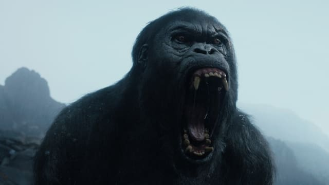 Ein Affe brüllt in «The Legend of Tarzan».