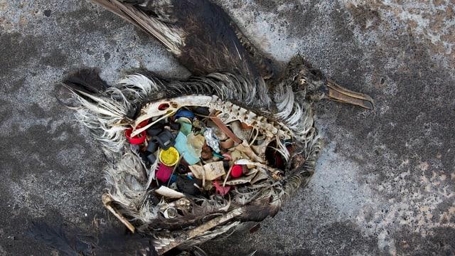 Ein toter Seevogel am Strand voll mit Plastik im Magen