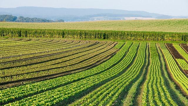 L'iniziativa «per la segirtad alimentara» da l'Uniun purila svizra survegn uss ina cuntraproposta.