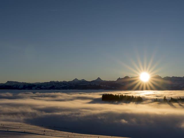 Sonnenaufgang über den Berner Alpen, darunter ein Nebelmeer.