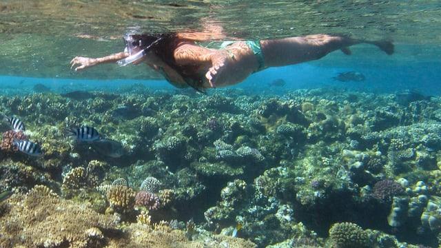 Eine Frau schnorchelt im Meer, um sie herum schwimmen Fische.