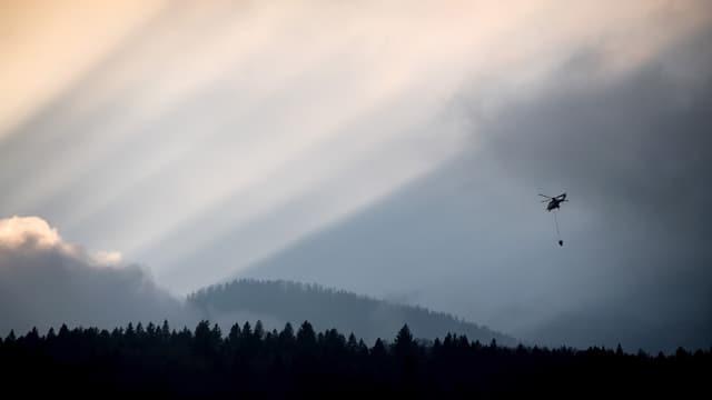 Ein Helikopter fliegt in der Dämmerung über den Wald.