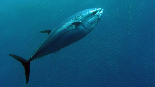 Fischfang-Studie.