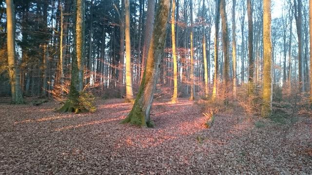 Blick auf Bäume im Könizbergwald.