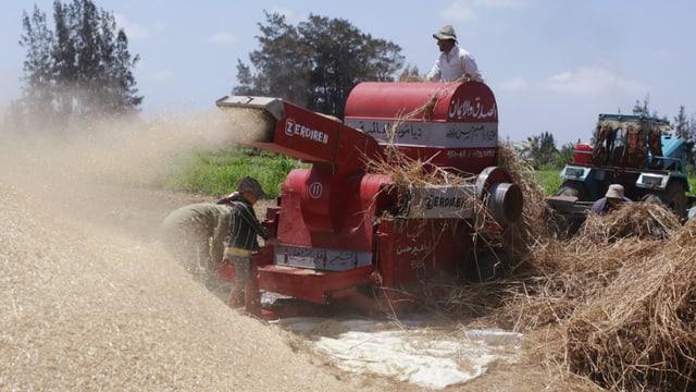 Ein Mähdrescher bei der Weizenernte in Ägypten, das eines der grössten Weizenimporteur-Länder ist.