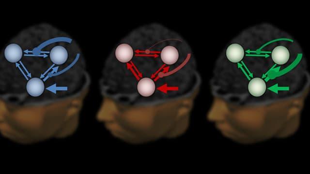 Ein grafisches Schema bezeichnet drei Regionen im Gehirn. Aus der Kommunikation dieser Regionen untereinander lässt sich der Grad der Schizophrenie berechnen.