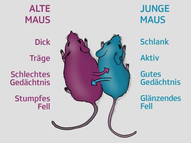 Illustration zweier Mäuse, deren Körper eng aneinander liegen.