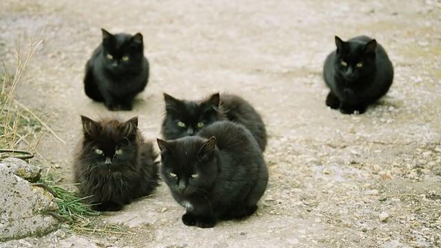 Sie lauern, auch am Samstag dem 14... die bösen (?) schwarzen Katzen.