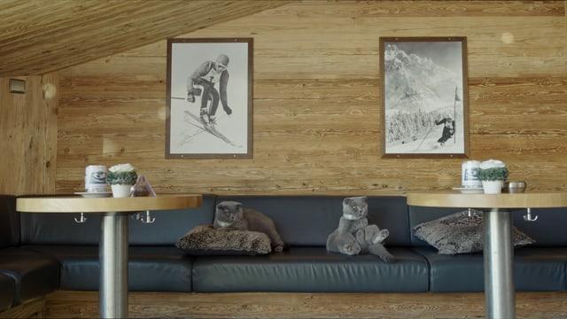 Zwei Katzen liegen auf einem Sofa