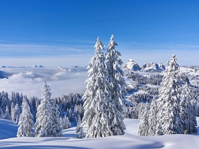 Verschneite Berglandschaft mit Tannen, blauem Himmel und Nebel im Tal